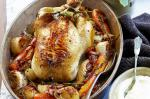American Braised Chicken With Aioli Recipe Appetizer