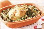 Ovenbraised Chicken Recipe recipe