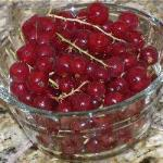 American Salad of Red Currants with Lemon Green Appetizer