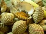 Italian Steamed Cockles Appetizer